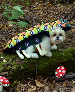 Creative costume ideas for dogs: Caterpillar Dog Costume