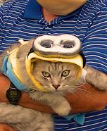 Minion Cat Costume