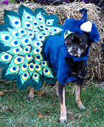 Dog in the Peacock Costume