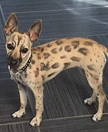Cheetah Girl Dog Homemade Costume