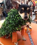 Chia Chihuahuas Costume
