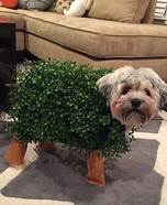 Homemade Chia Pet Costume for Dogs