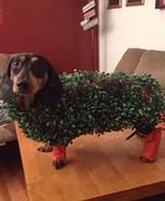 Chia Pet Homemade Costume