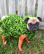 Creative costume ideas for dogs: Chia Pet Costume
