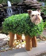 DIY Chia Pet Costume