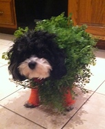 Chia Pet Dog Costume