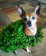 Chia Pet Homemade Costume