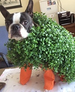 Chia Pet Dog Homemade Costume