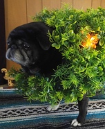 Chia Pug Homemade Costume