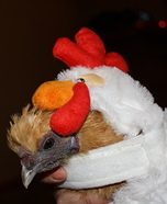 Chicken Costume for Pets