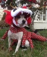 Chinese Dragon Dog Costume