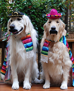Cinco De Mayo Dogs Homemade Costume