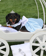 Cinderella Dog Homemade Costume