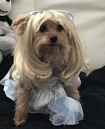 Homemade Cinderella Dog Costume