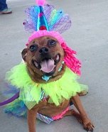 Circus Clown Dog Homemade Costume