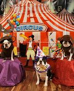 Circus Monkeys Dogs Homemade Costume