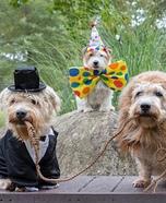 Cirque de Terrier Homemade Costume