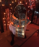 Cleopatra Dog Homemade Costume