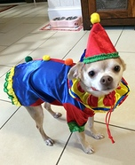 Clown Dog Costume