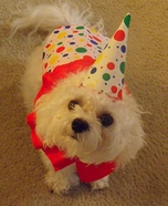 DIY Clown Dog Costume