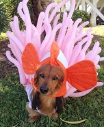 Creative costume ideas for dogs: Clown Fish and Anemone Dog Costume