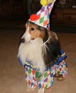 Clownin Around Homemade Costume for Dogs