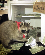 Raccoon dressed as Robber