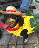Creative costume ideas for dogs: Corn Dog Costume