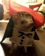 Count Hogula Pet Costume