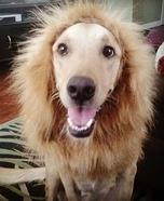 Cowardly Lion Dog Costume Idea