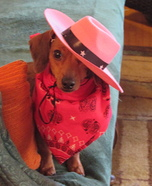 Cowgirl Dog Homemade Costume