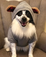 Cuddle Bear Dog Homemade Costume