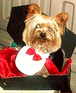 Dog in a Coffin Costume