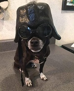 Darth Vader Dog Homemade Costume