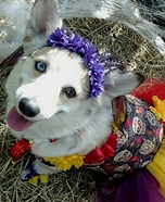 Day of the Dead Dog Homemade Costume