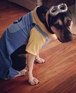 Despicable Me Minion Dogs Costume
