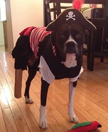 Dog Pirate Homemade Costume