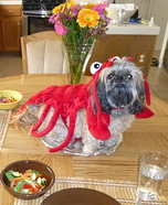 Lobster Costume for Dogs