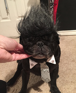 Don King & Ali Pugs Homemade Costume