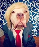 Donald Trump Dog Homemade Costume