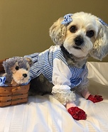 Dorothy & Toto Dog Homemade Costume