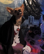Dracula Dog Homemade Costume