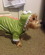 Dragon Costume Ideas for Dogs