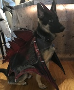 Dragon Dog Homemade Costume
