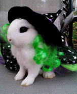Dwarf Hotot Bunny Witch Homemade Costume