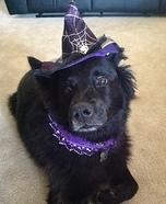 Elegant Witch Halloween Costume
