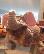 Elephant Bunny Costume