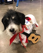 Elvis Dog Homemade Costume