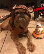 Ewok Dog Homemade Costume