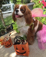 Fairy Princess Dog's Costume